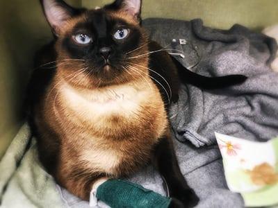 Animal Emergency Care in Lisle